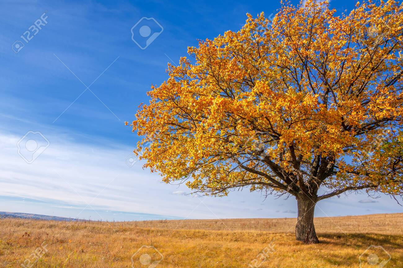 Autumn landscape photography, best photographer, mixed forests in autumn condition, colorful leaves, divided into burgundy, red, green, with patterned carpet - 141715169