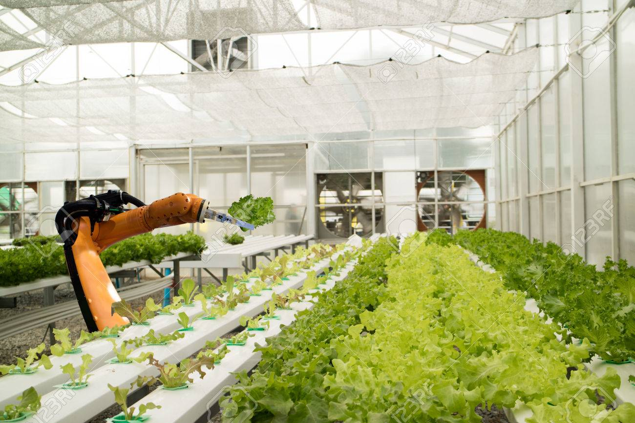smart robotic in agriculture futuristic concept, robot farmers (automation) must be programmed to work in the vertical or indoor farm for increase efficiency, growing a seed, harvesting, reduce time - 87395176