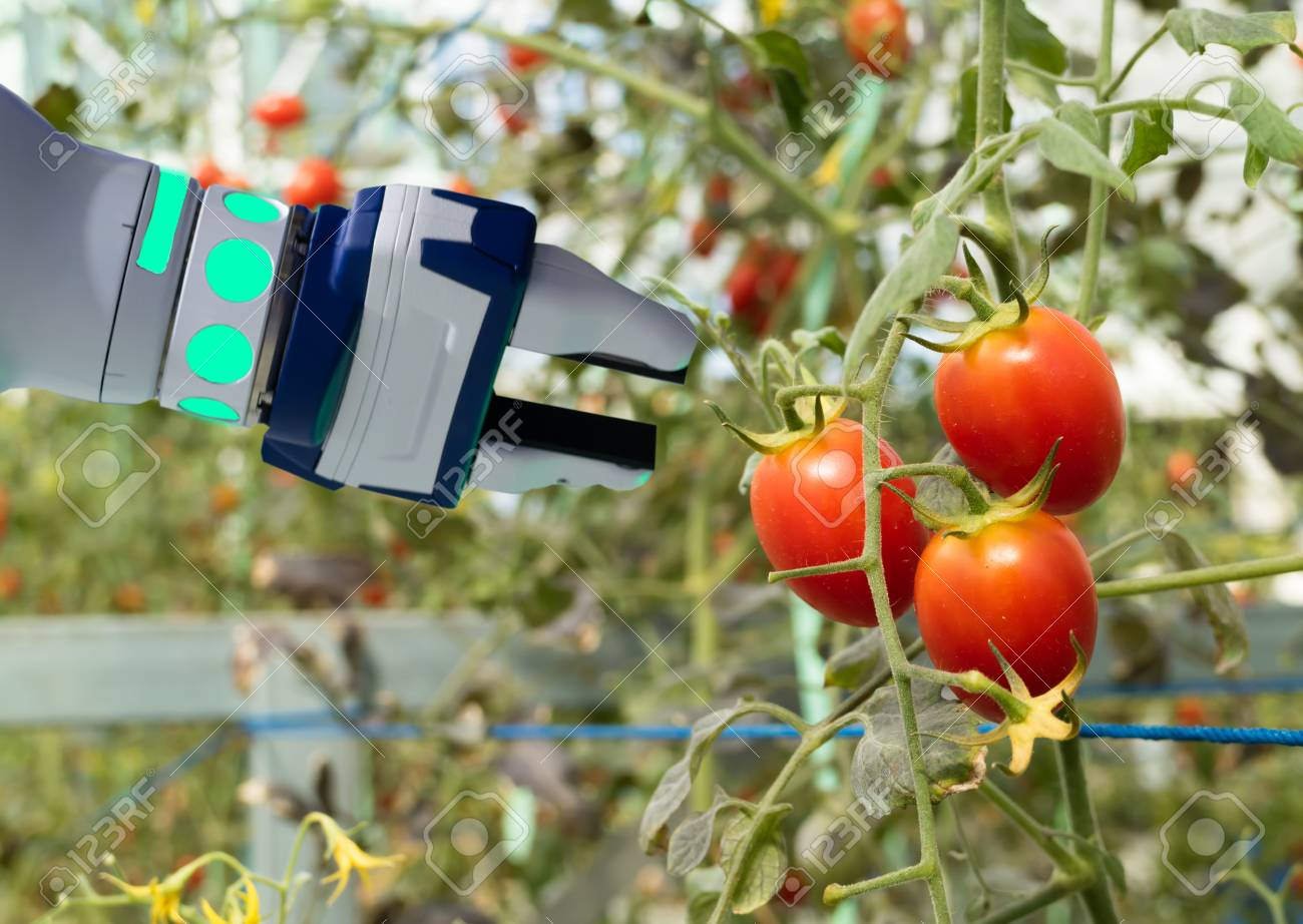smart robotic in agriculture futuristic concept, robot farmers (automation) must be programmed to work in the vertical or indoor farm for increase efficiency, growing a seed, harvesting, reduce time - 93732423