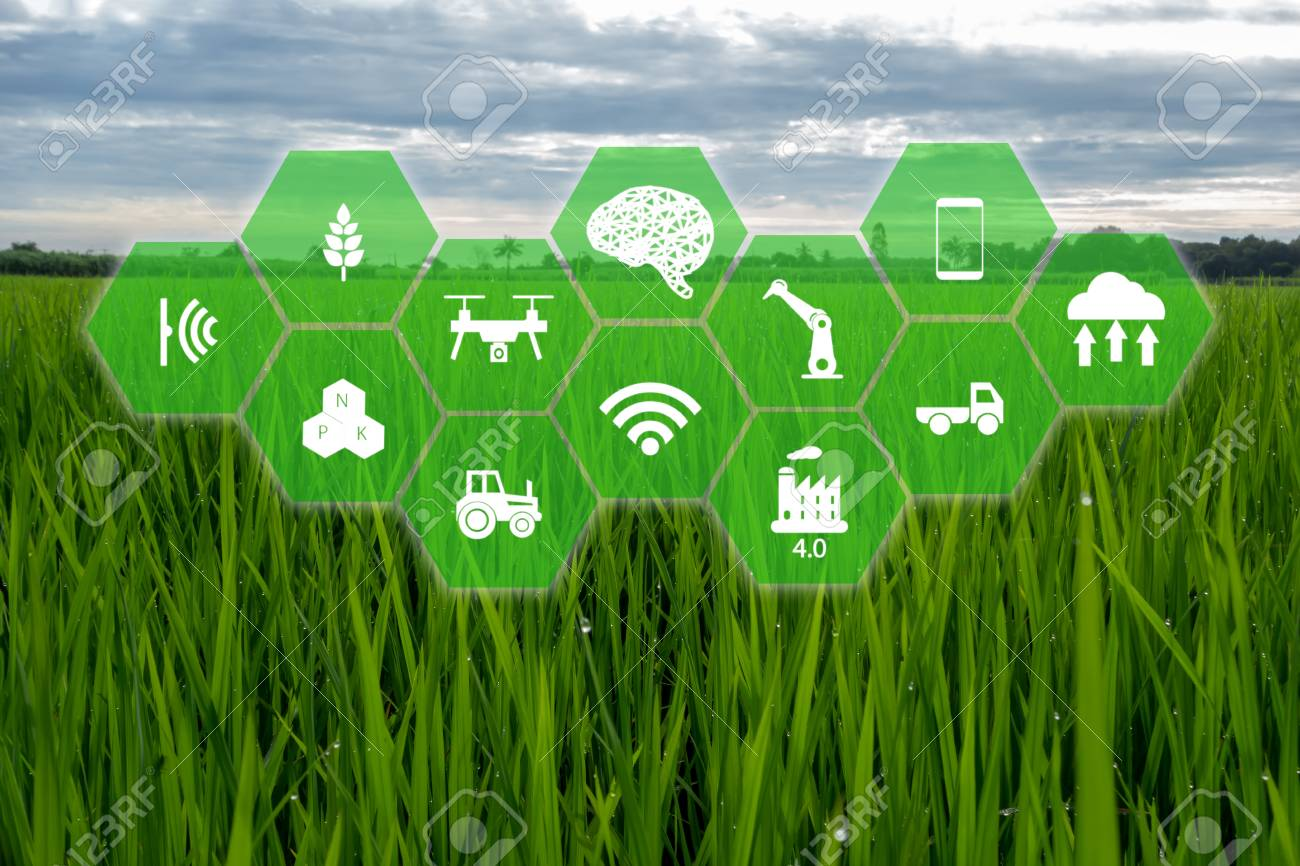 iot, internet of things,farmer agriculture concept, Smart farm with Robotic icon (artificial intelligence/ ai) use for management , control , monitoring, and detect with the sensor in the farm, field. - 113668174
