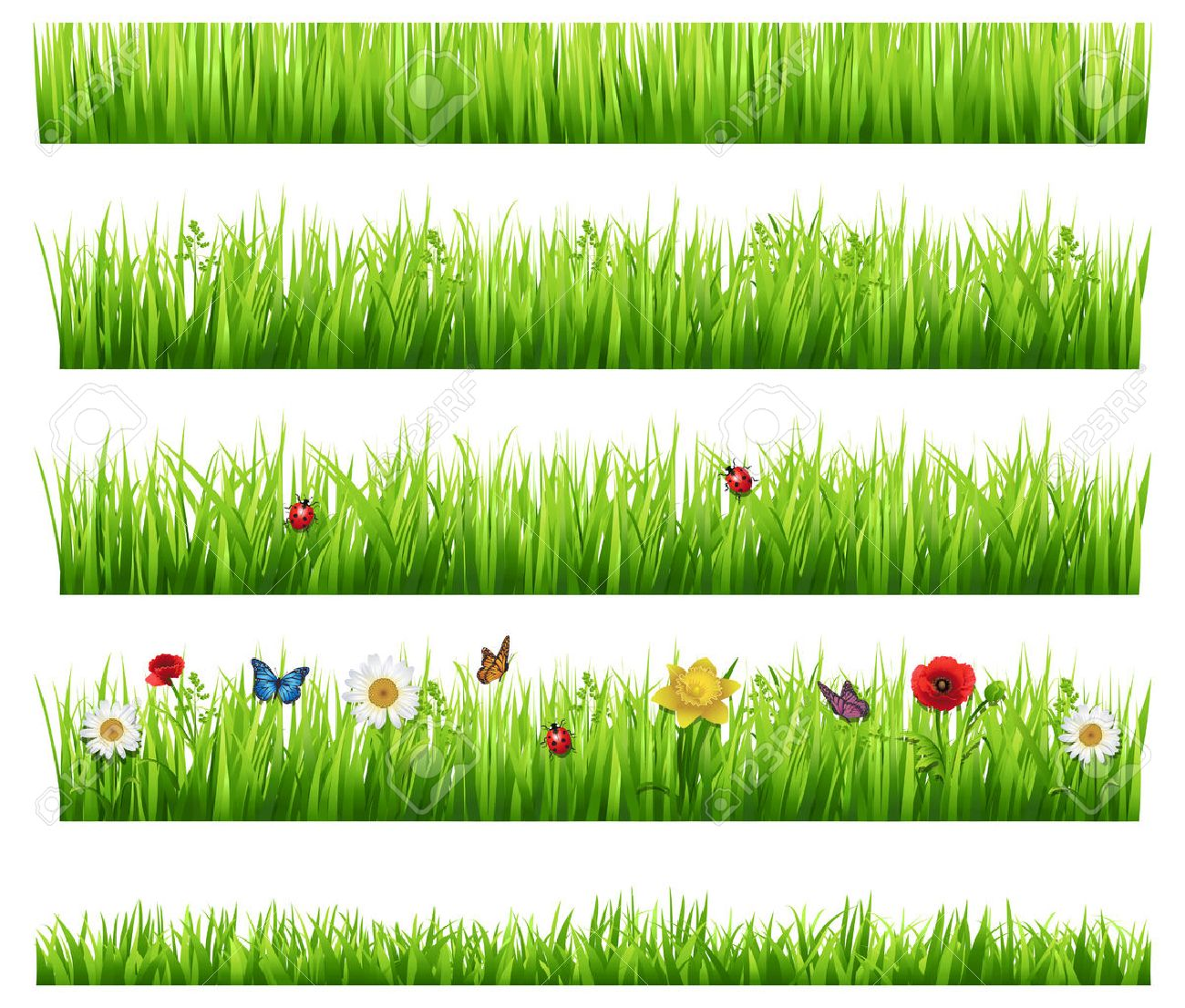 Green grass collection - 25311064