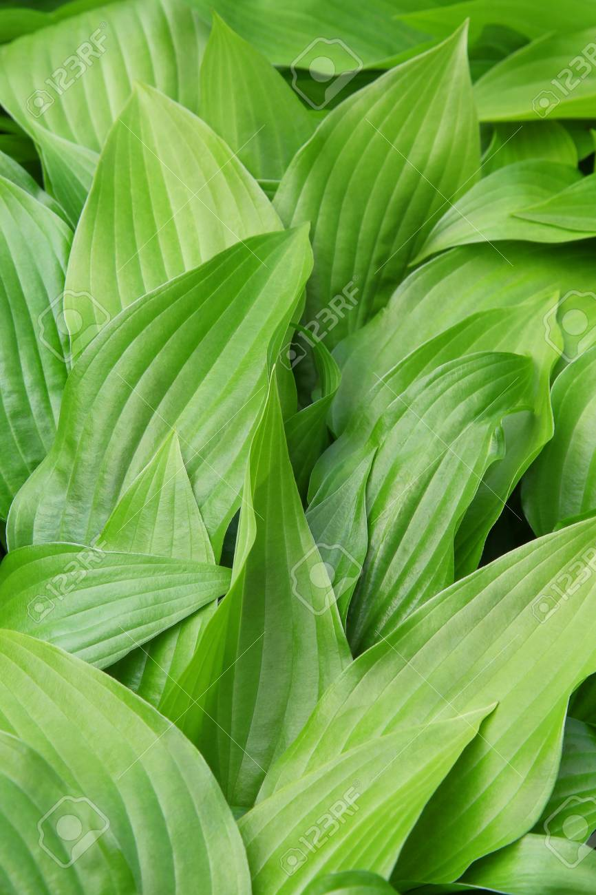 bright green leaves Stock Photo - 10248614