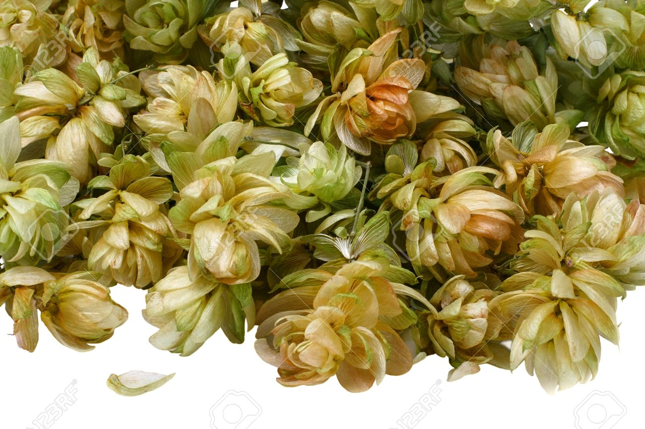 Dried Flowers Are Yellow And Green Plants Hops Close Up Stock