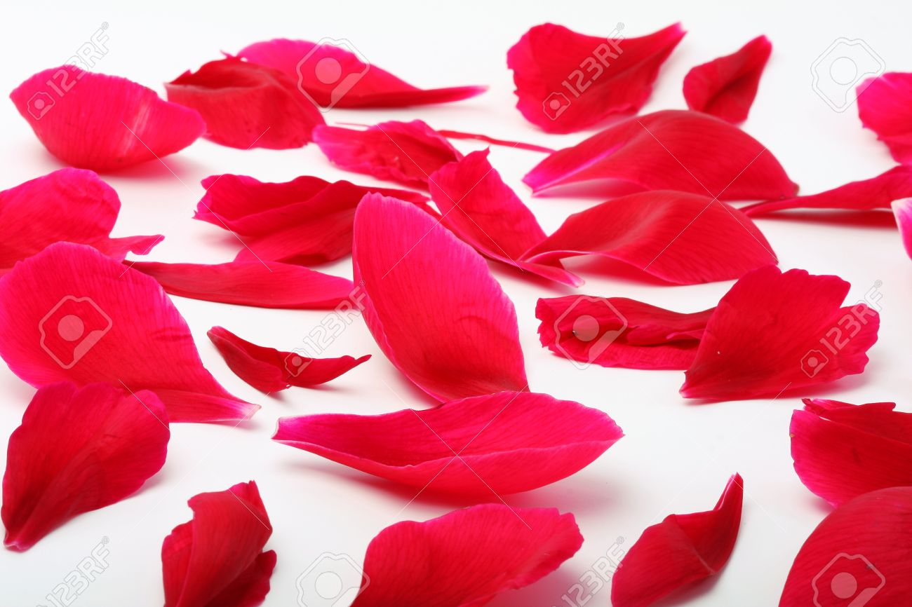 Un Montón De Pétalos De Flores Rojas Dispersas Sobre Un Fondo Claro
