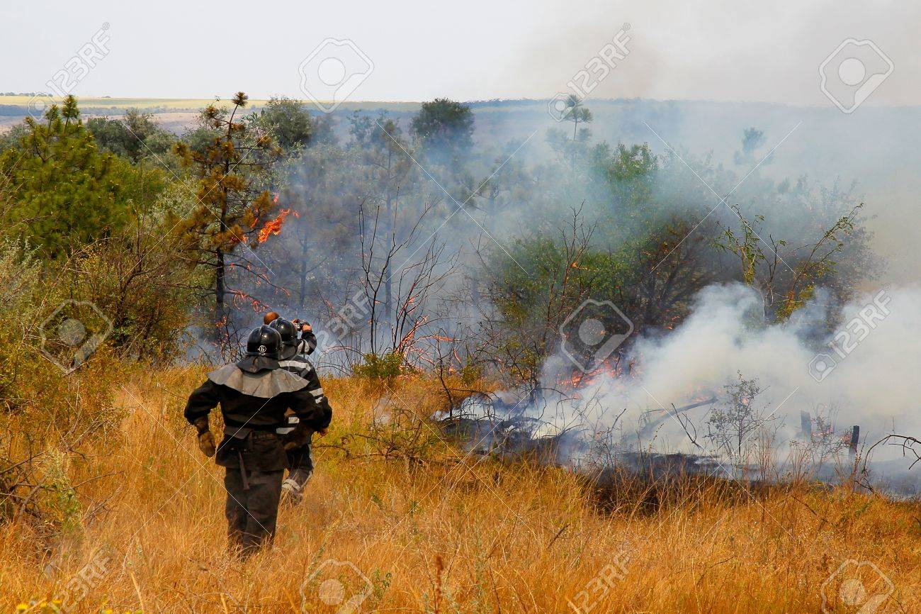 Firefighters extinguish a fire in the woods on a hot day, Ukraine Stock Photo - 14773813