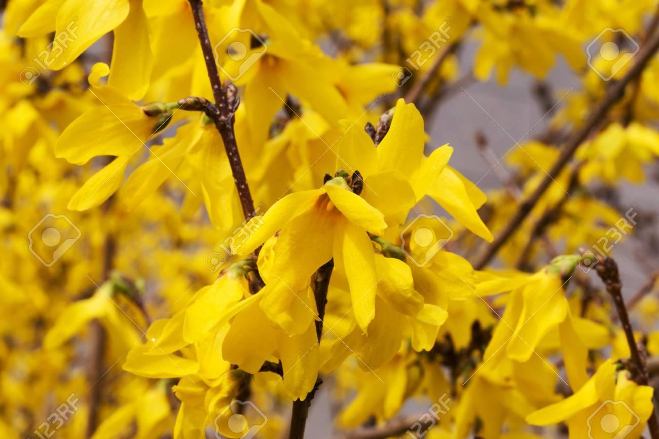 Beautiful Bright Yellow Flowers Soft Selective Focus Closeup