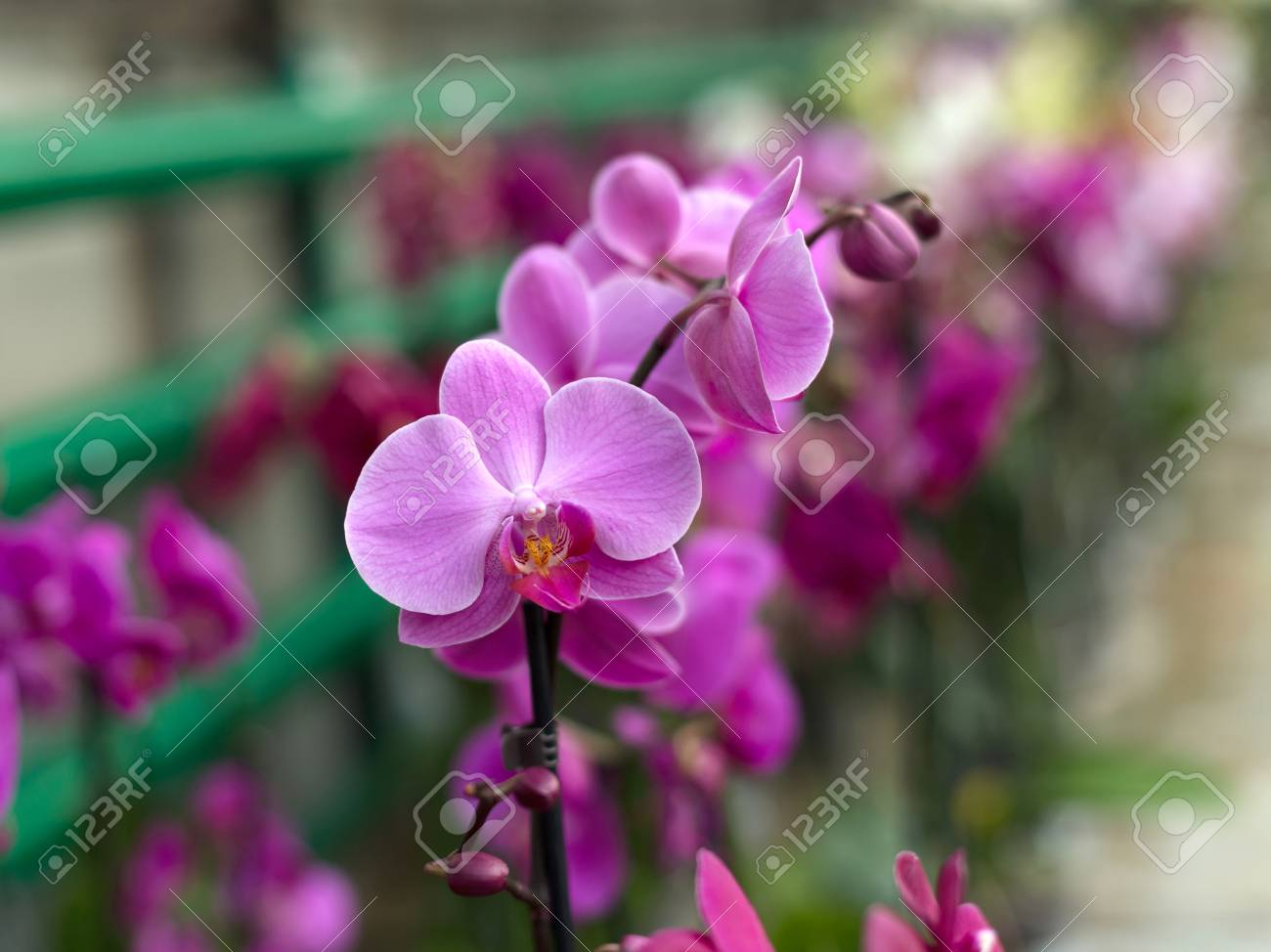 Repeated Orchid Flowers Selective Focus Beautiful Orchids Stock