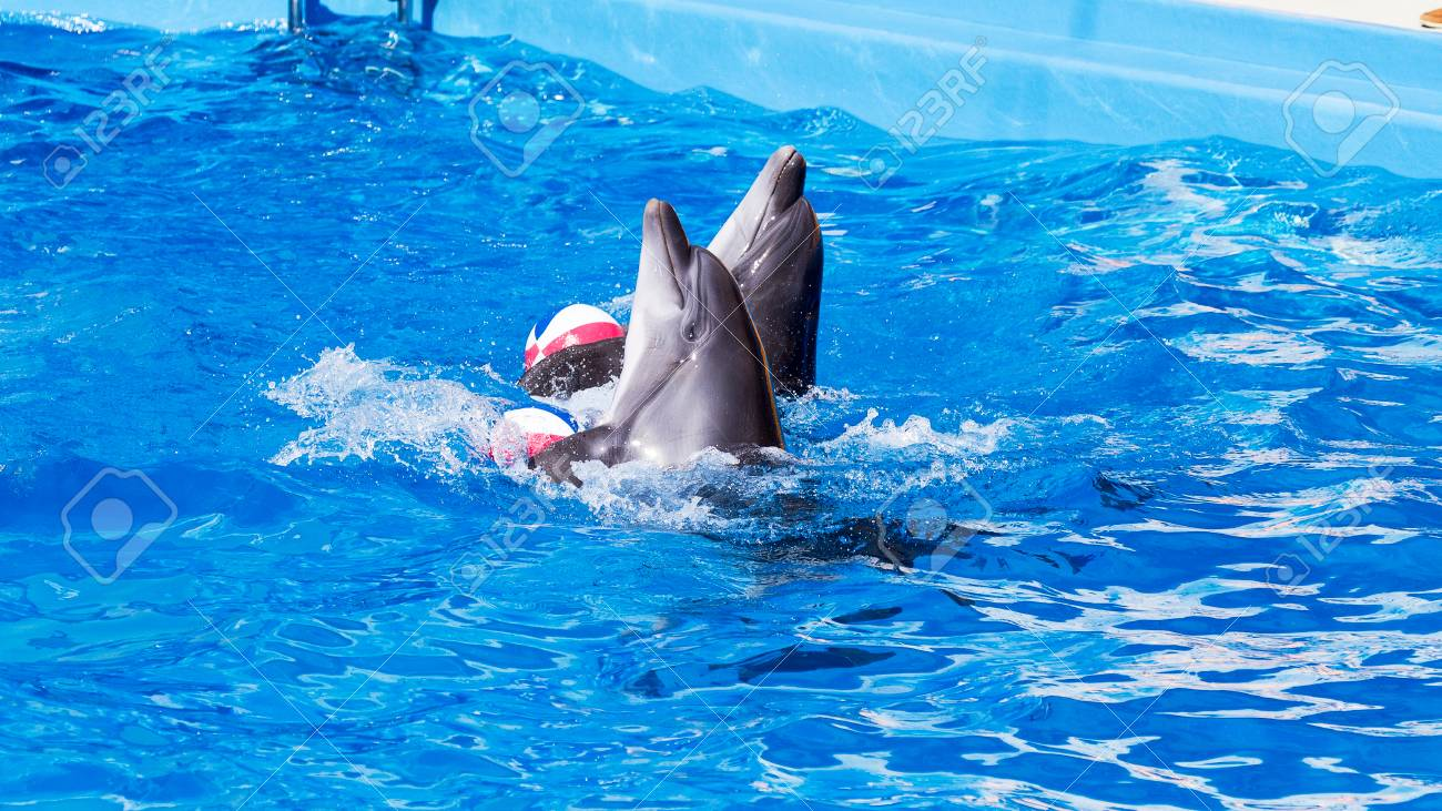 Glad beautiful dolphin in blue water in the swimming pool on..