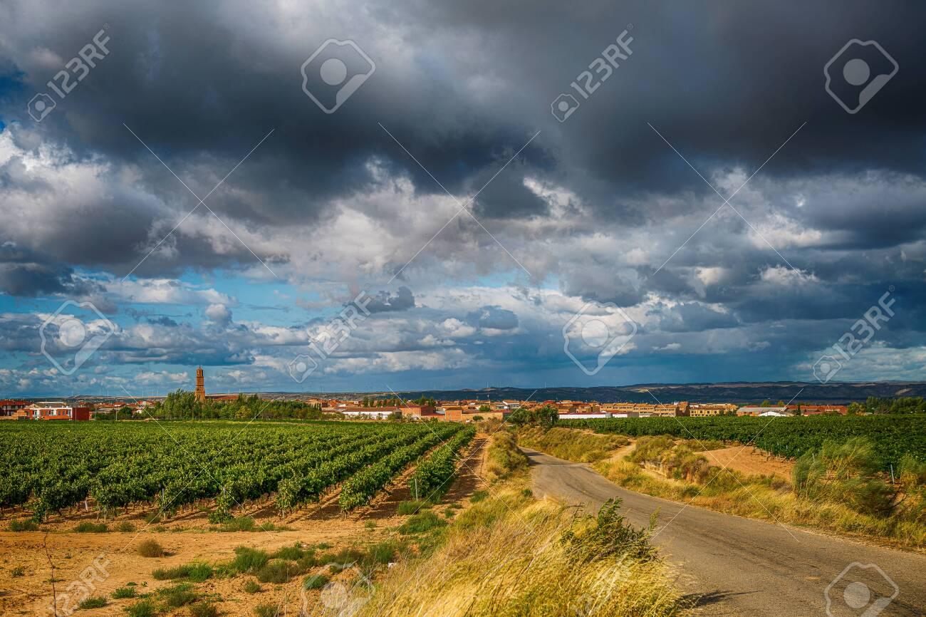 vineyard landscape in summer in Spain - 146736424