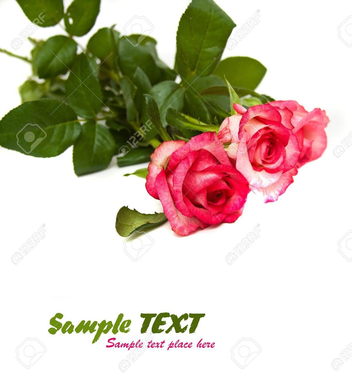 arôme, fond, beau, beauté, fleur, bouquet, bourgeon, carte, centre