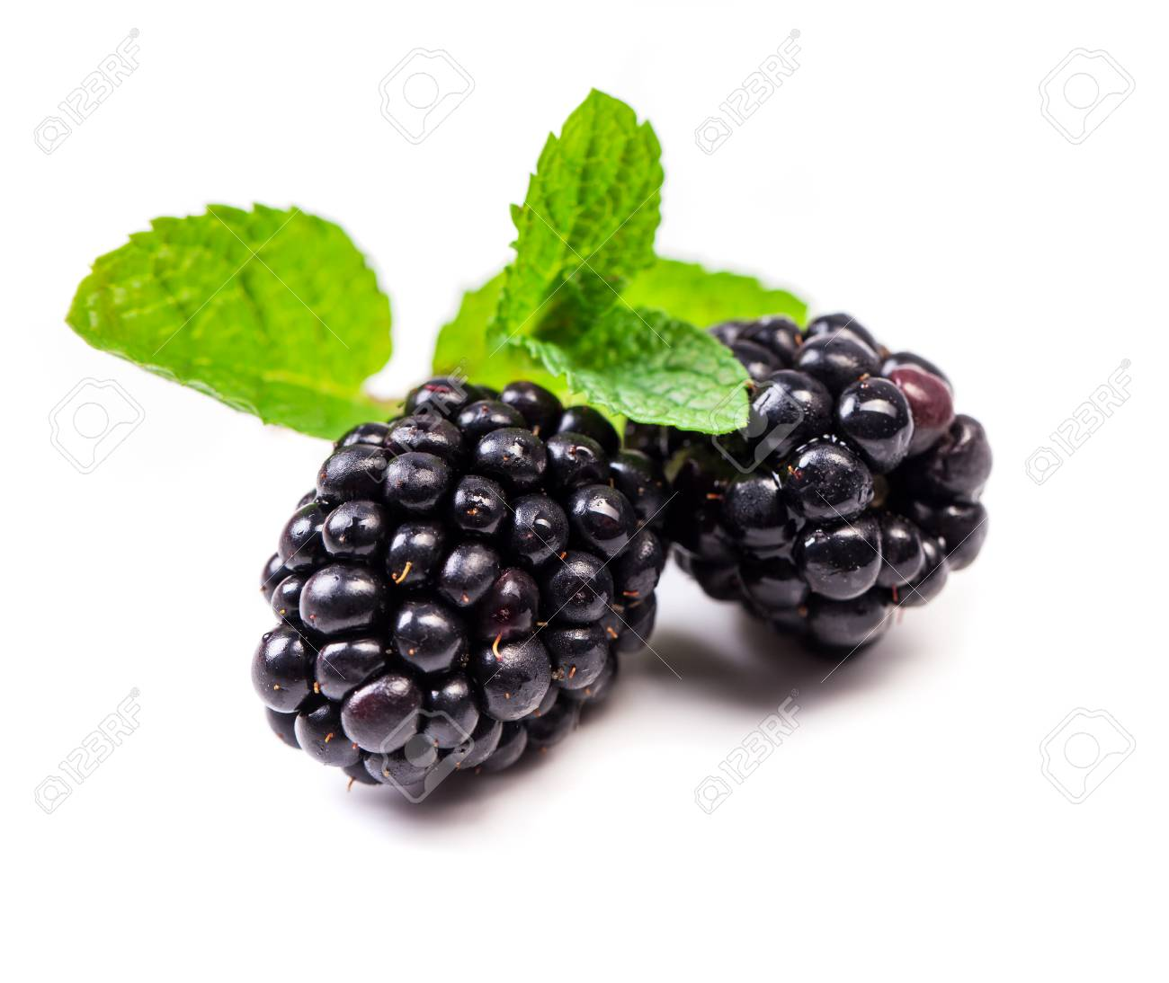 Blackberry with mint leaves isolated in white - 107667756