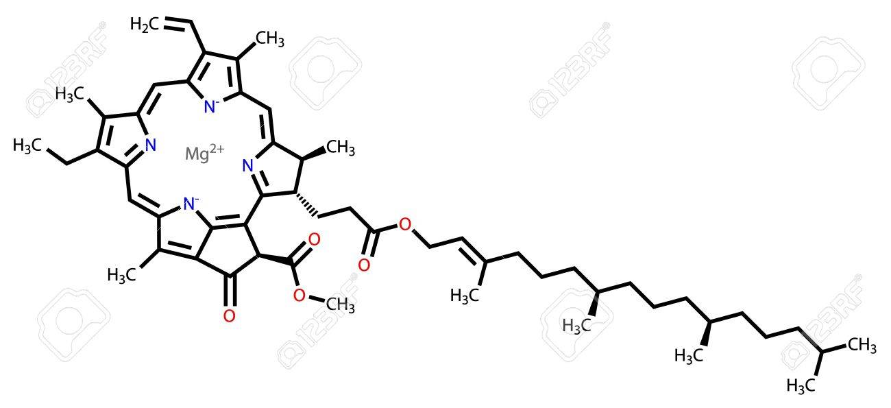 Chlorophyll A structural formula Stock Vector - 12087373