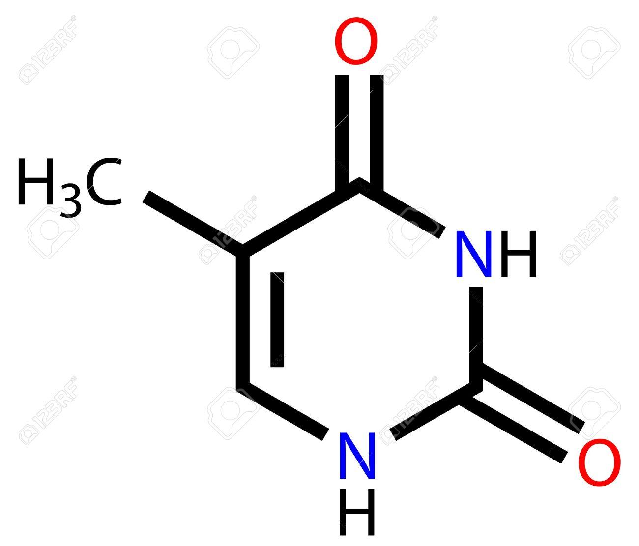 核酸塩基のチミン構造式のイラス...