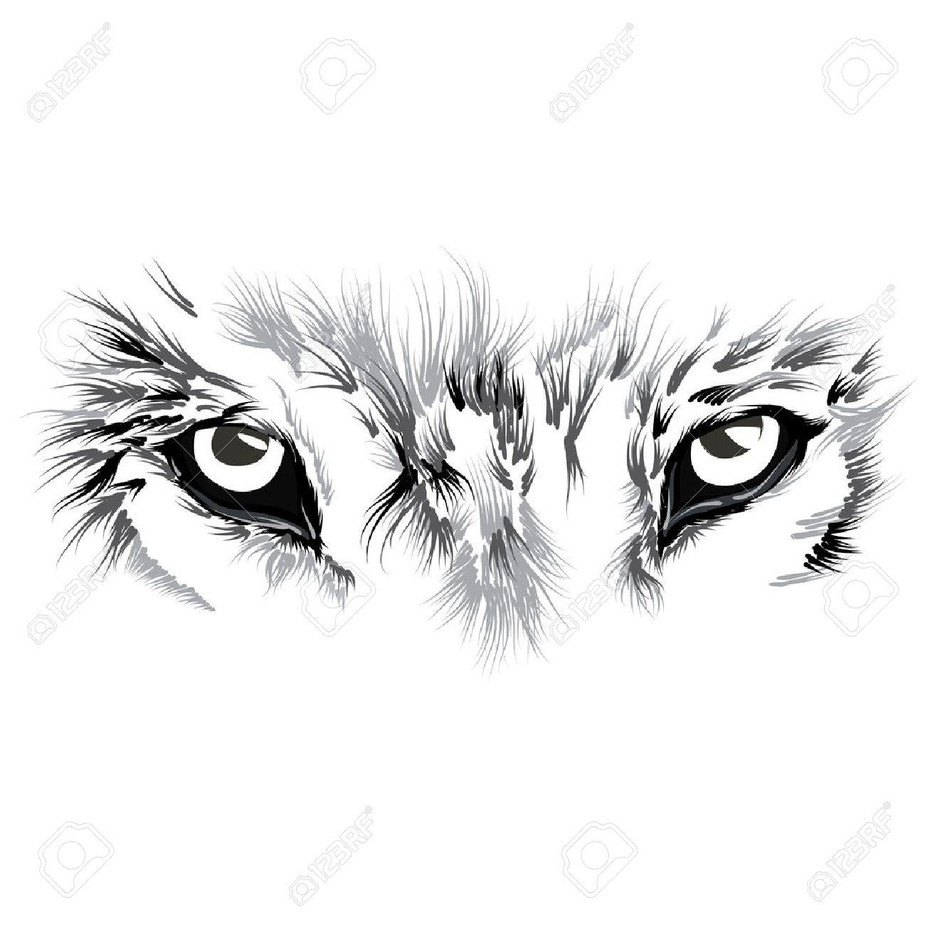beautiful Wolf face. illustration - 57641388