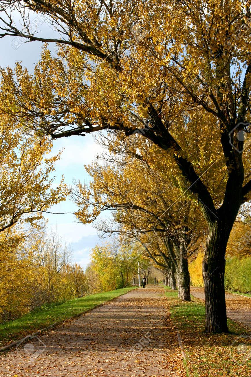 Autumn in the city Stock Photo - 569377