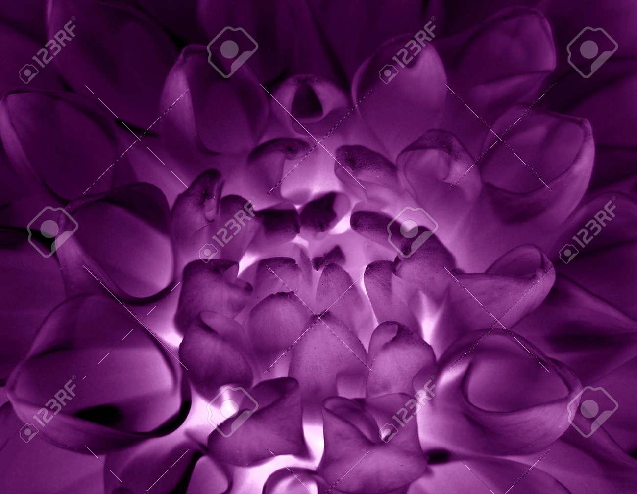 Flower close-up Stock Photo - 579417