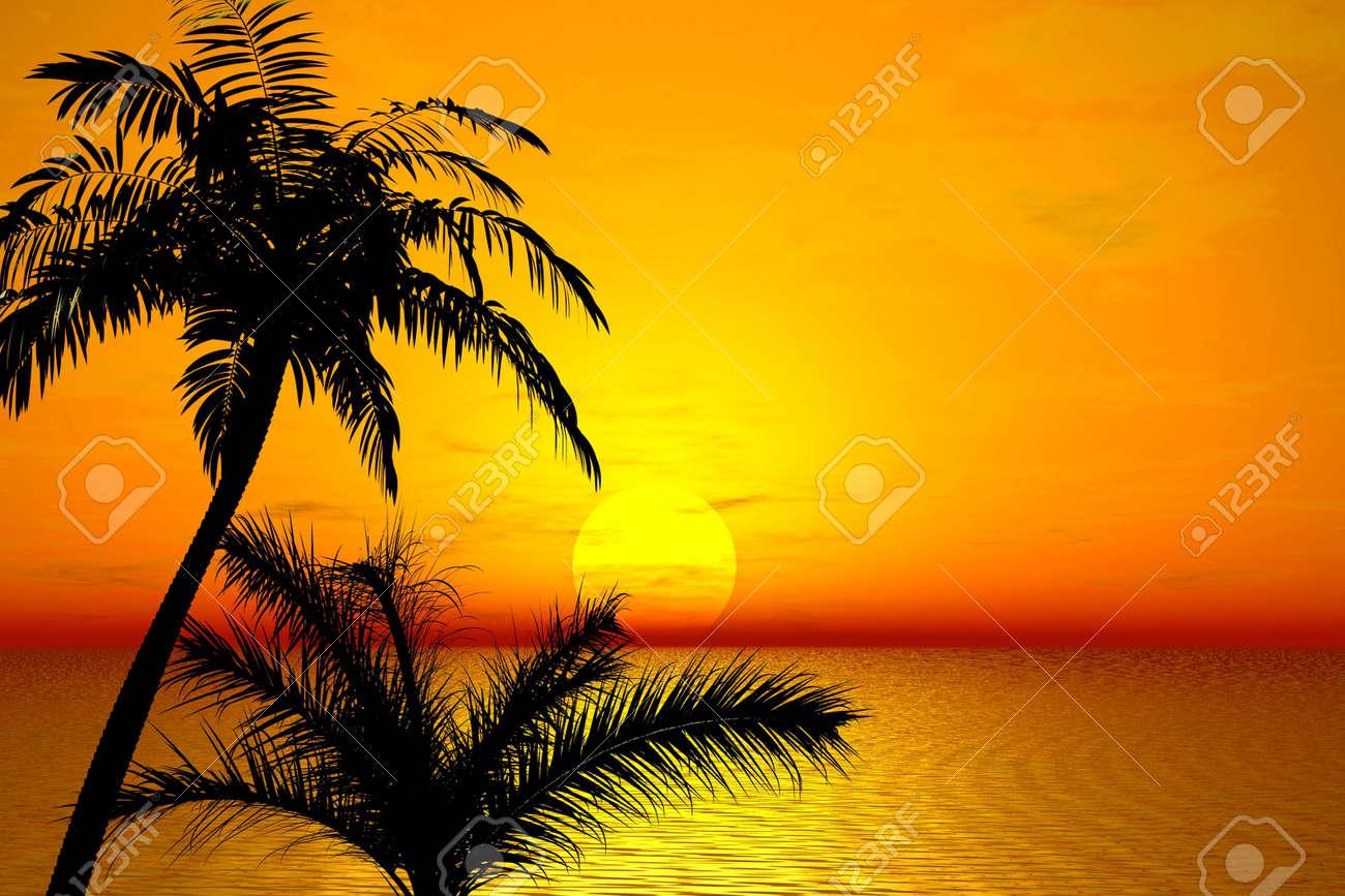 Sunset. Palms Stock Photo - 1268244