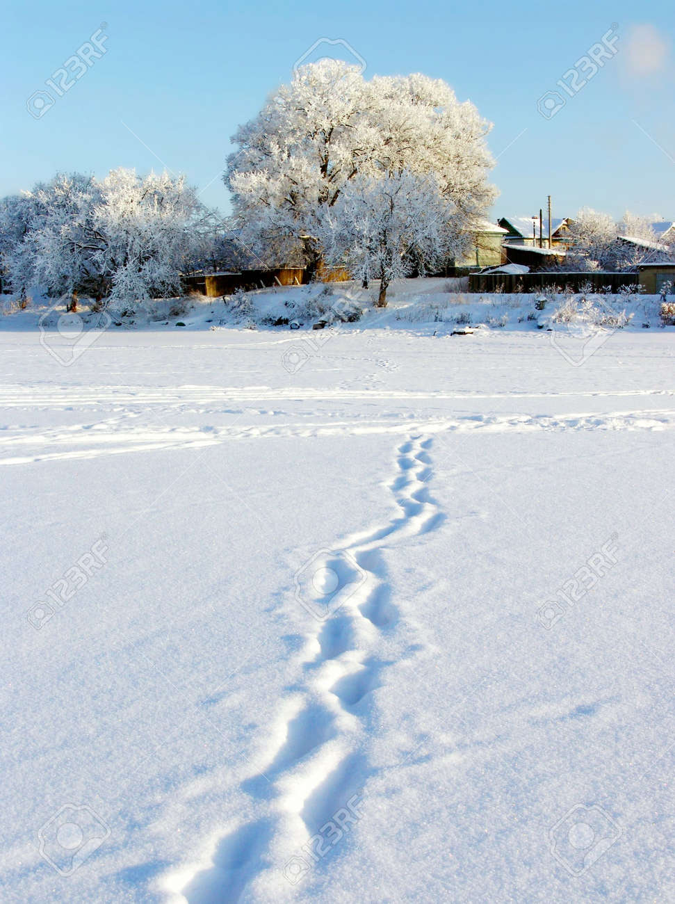 Winter nature. track Stock Photo - 2073371