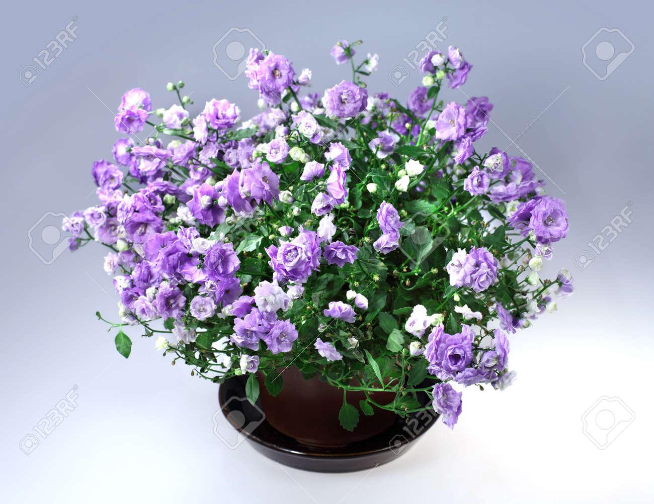 flores con maceta