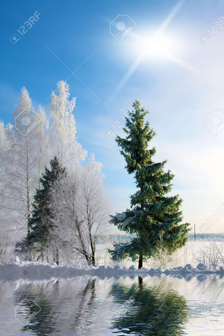 Winter landscape . Forest in a hoarfrost, sun and reflection Stock Photo - 11340182
