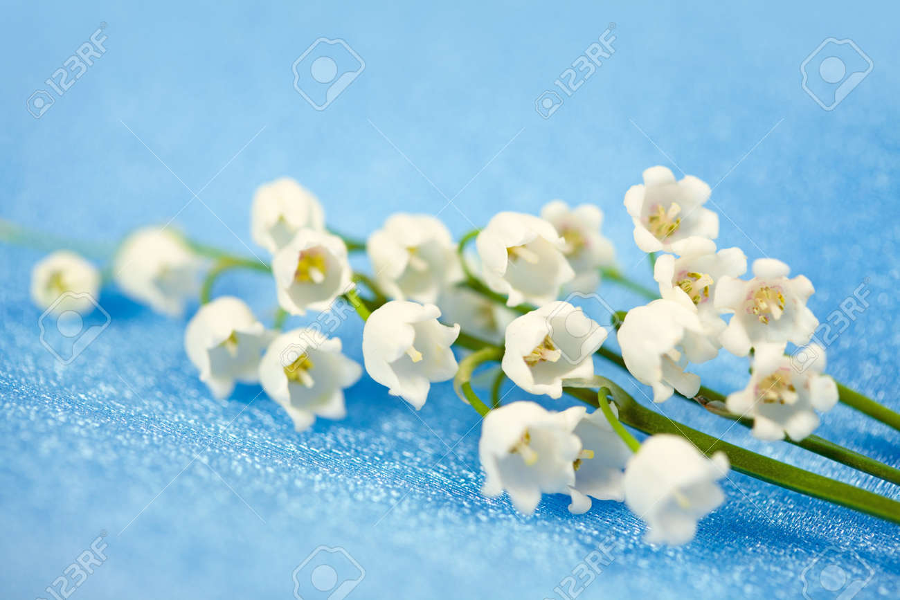 Spring flowers lily of the valley on blue silk background stock spring flowers lily of the valley on blue silk background stock photo 12639122 mightylinksfo
