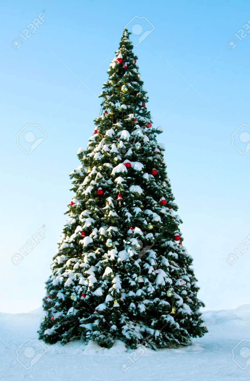 Wonderful Big Christmas Trees Part - 14: Big Christmas Tree On Snow, Background Of Blue Sky Stock Photo - 16538883