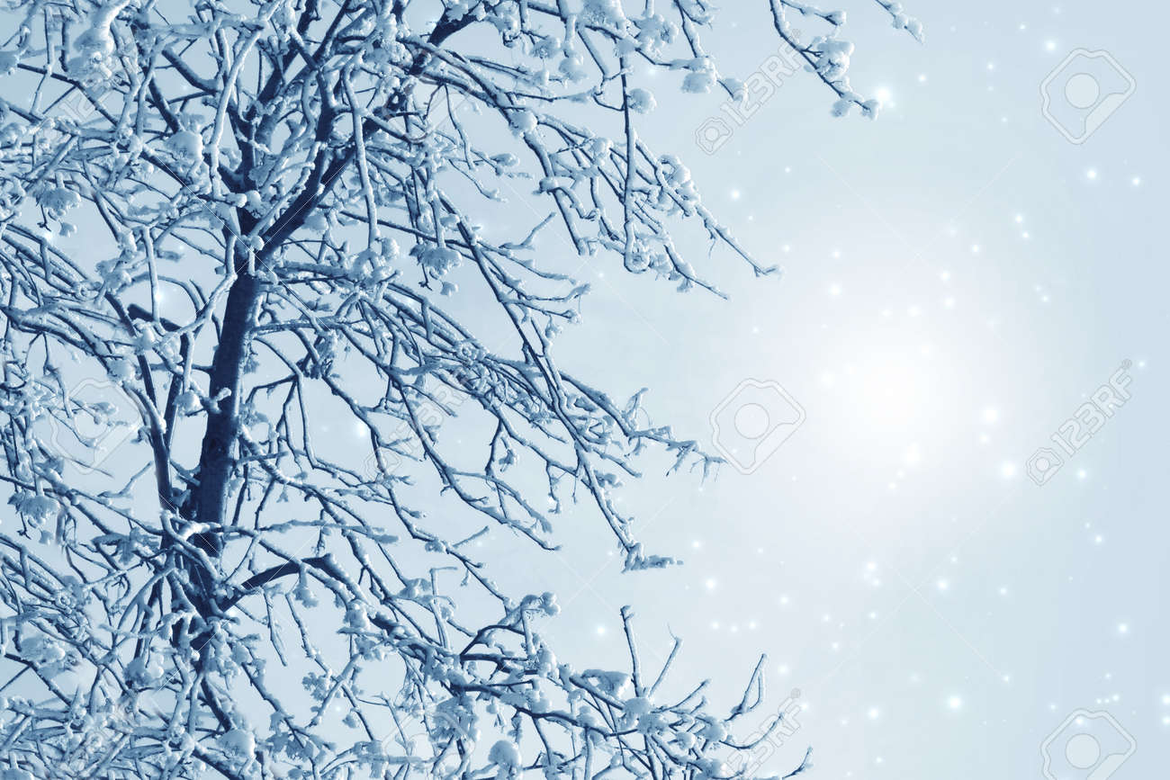 Misty winter picture with tree, snow and hoarfrost Stock Photo - 16690649