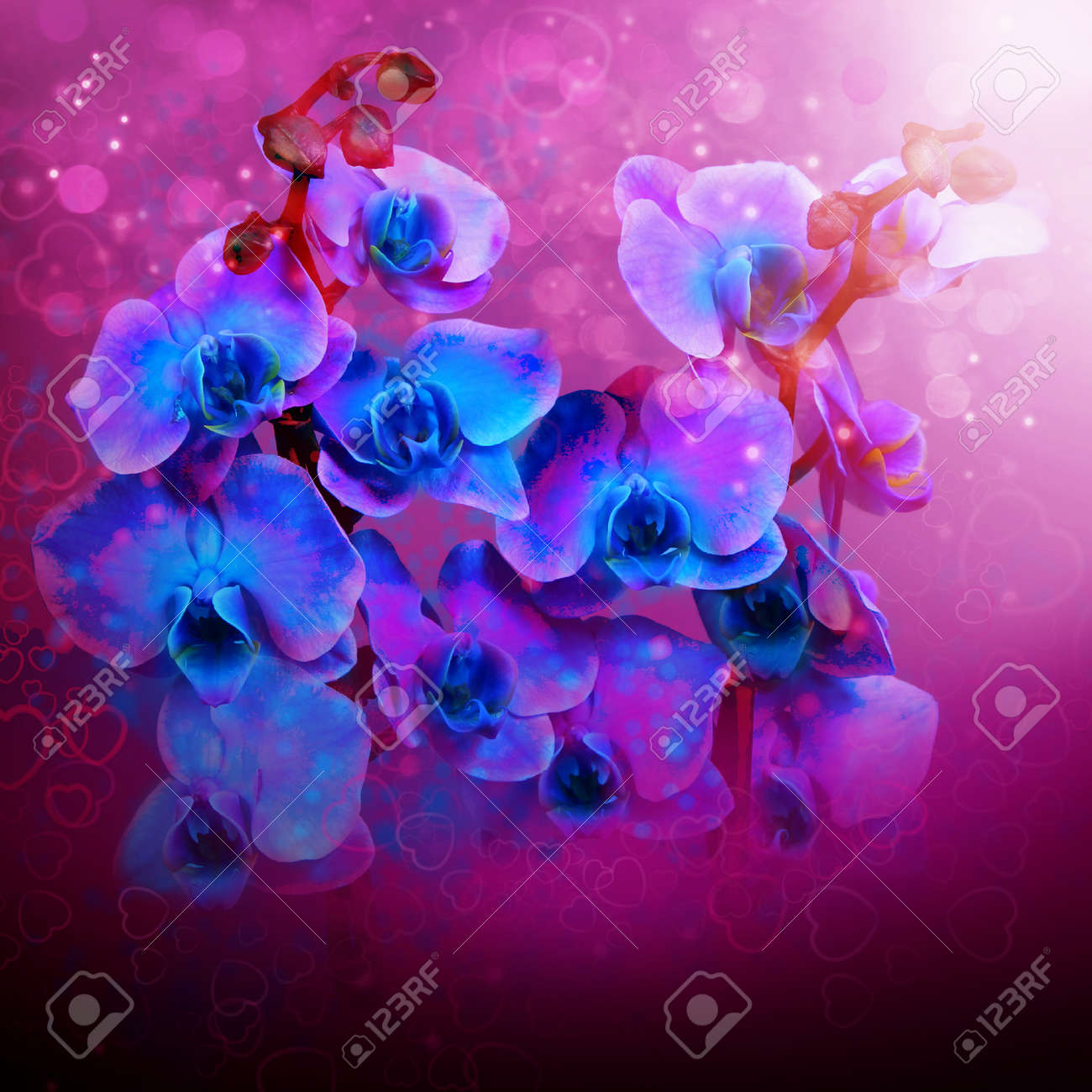 Hermosas Flores Orquideas Azules Fondo Para La Cubierta De Cd Y