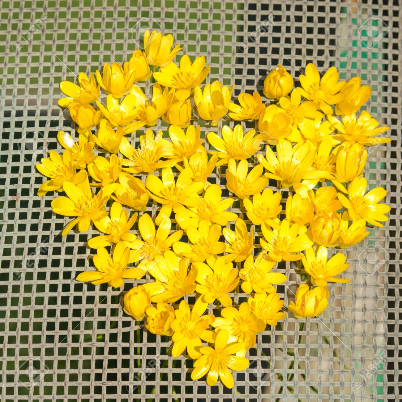 Shape Of Heart From Yellow Anemone Flowers On A Net Royalty Fria