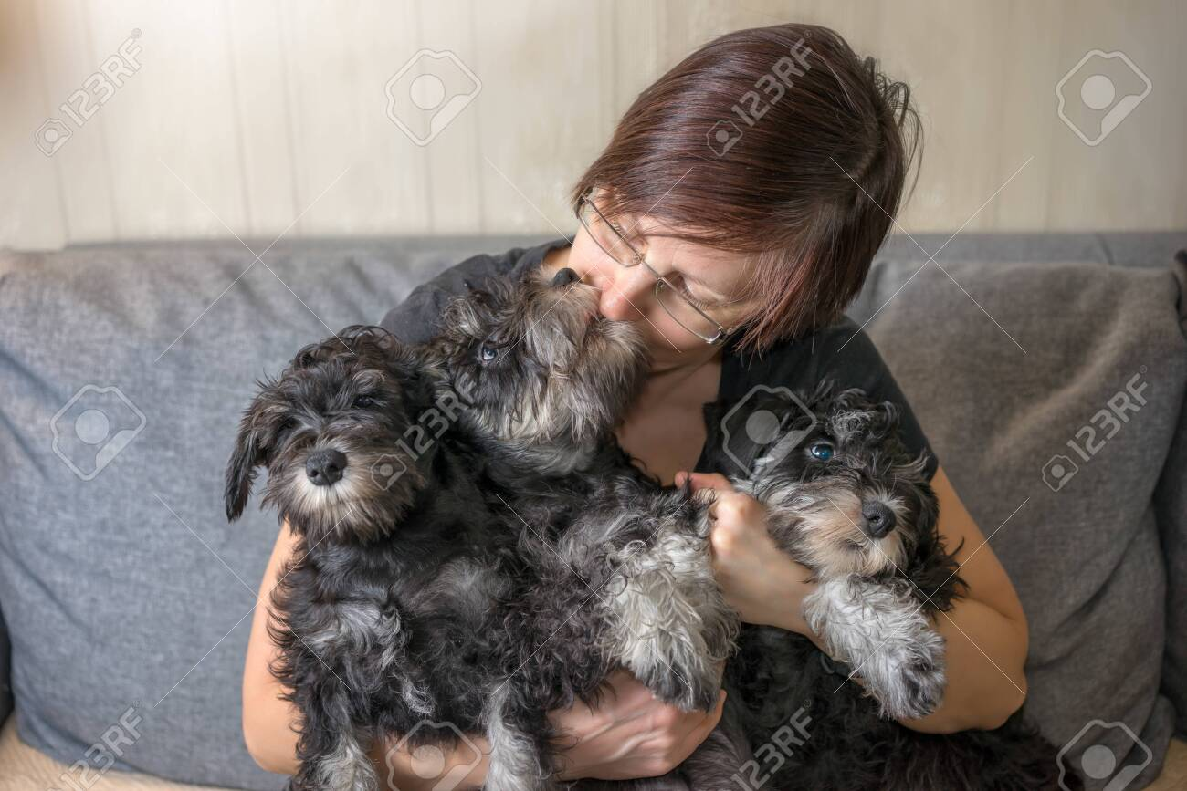 Breeder Of Dogs With Her Pets Three Miniature Schnauzer Puppies Stock Photo Picture And Royalty Free Image Image 142458132