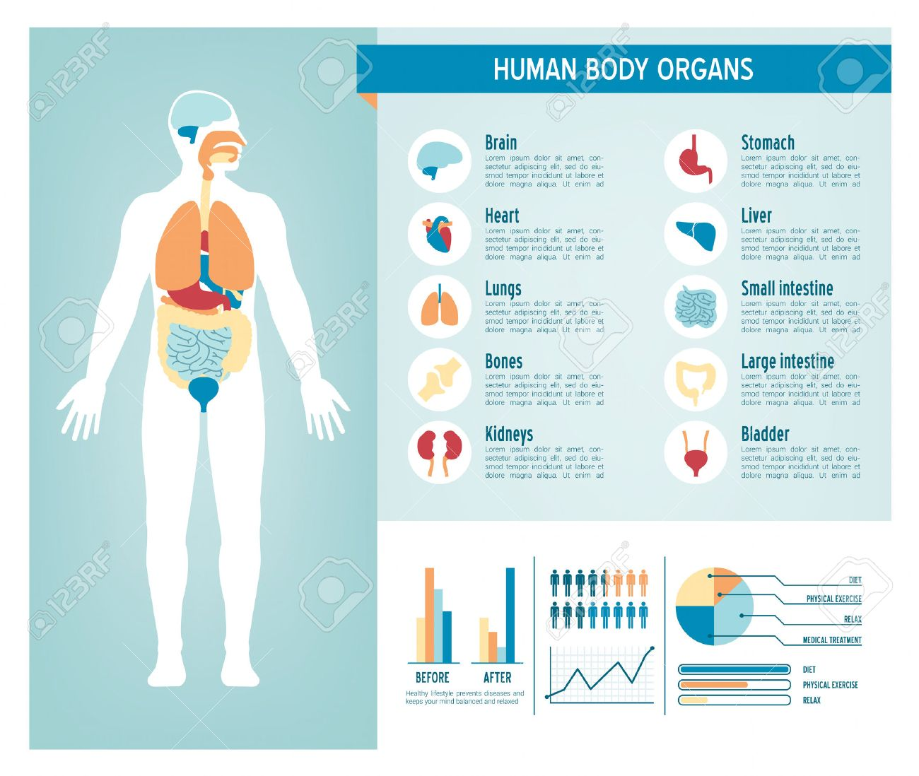 Der Menschliche Körper Gesundheitswesen Infografiken, Mit ...