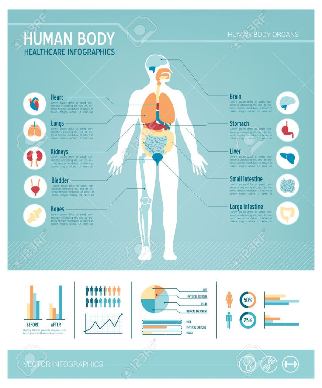Human Body Health Care Infographics, With Medical Icons, Organs ...