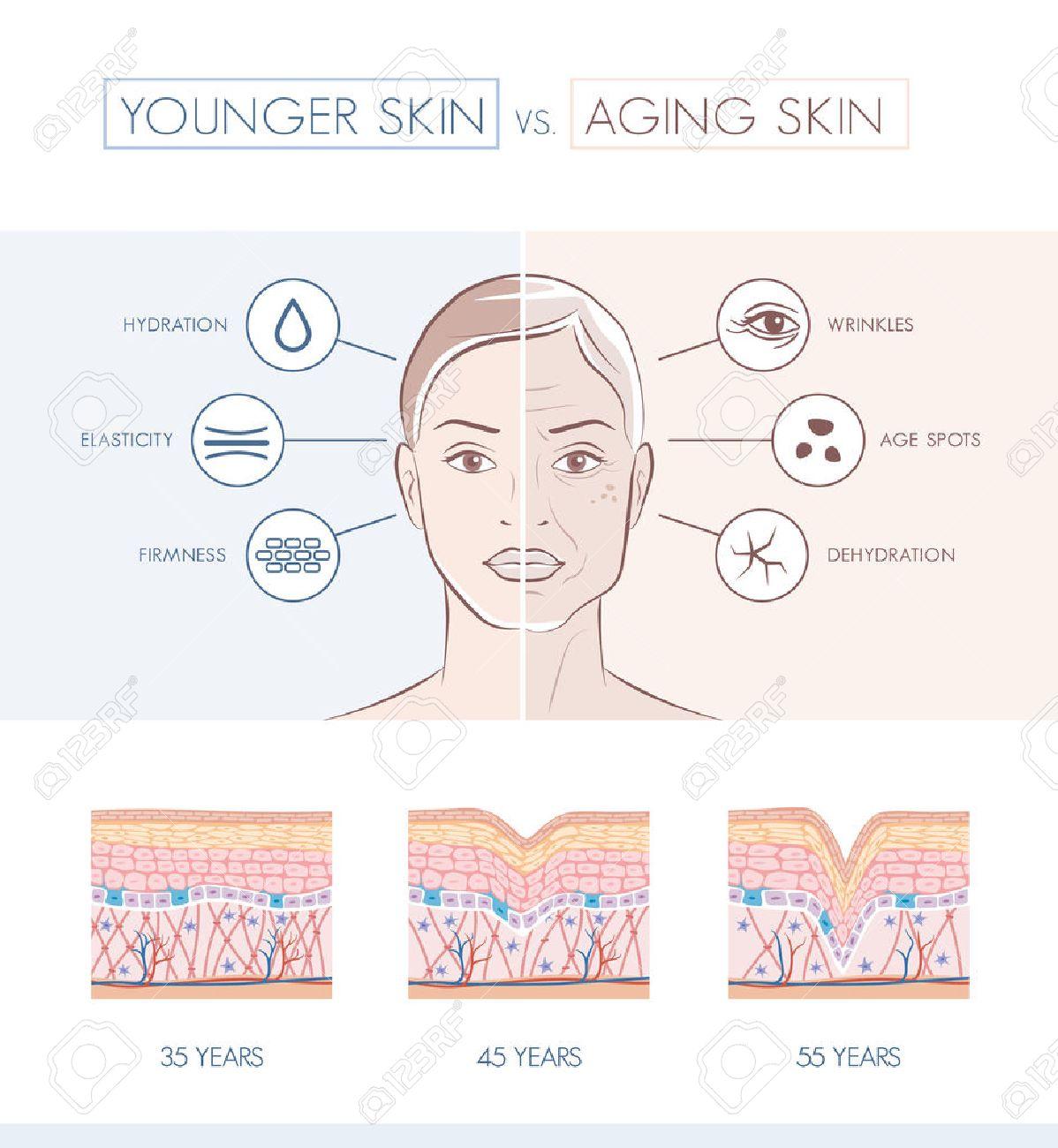 Junge Gesunde Sking Und ältere Haut Vergleich, Hautschichten Und ...
