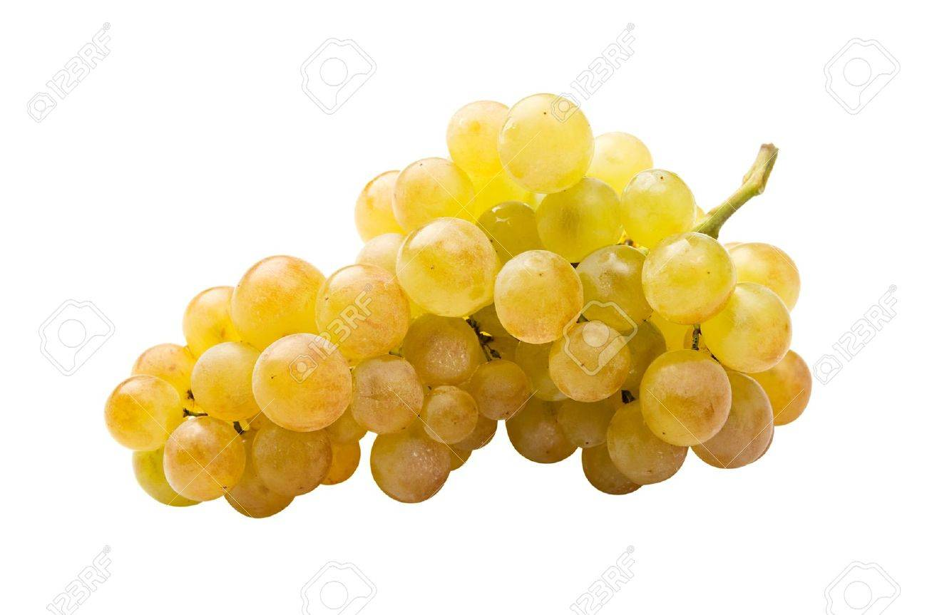 White grape (riesling) fully isolated - 11698306