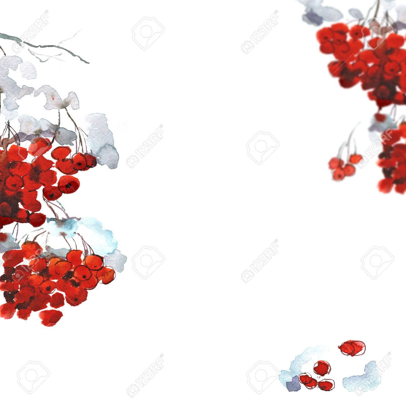 Watercolor Winter Background With Snowy Mountain Ash Red Berries
