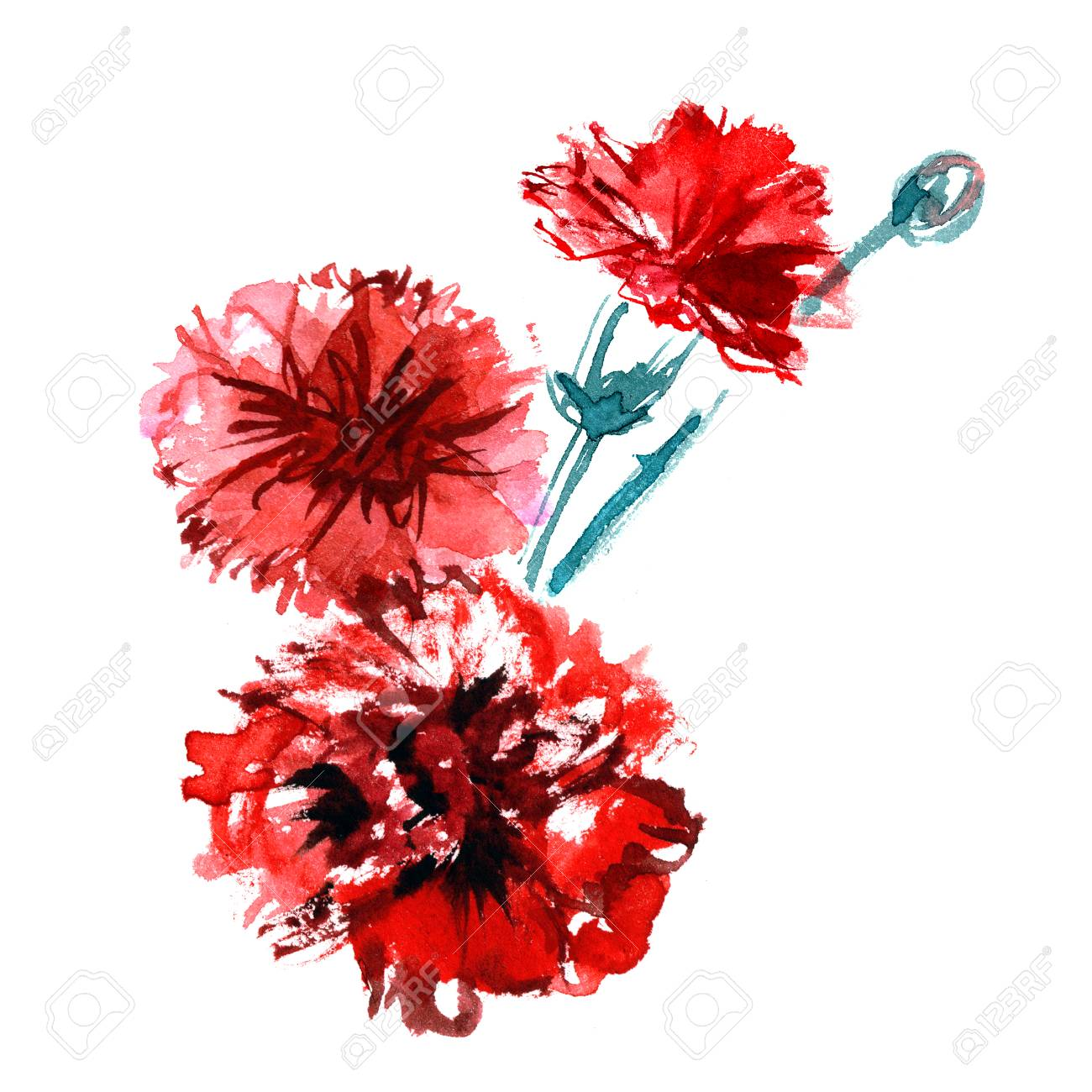 Watercolor Hand Painted Carnations Isolated On A White Background