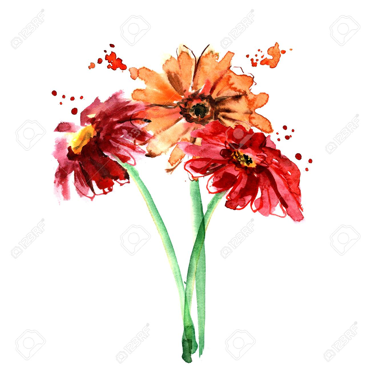 Watercolor Hand Painted Gerberas On White Background. Invitation ...