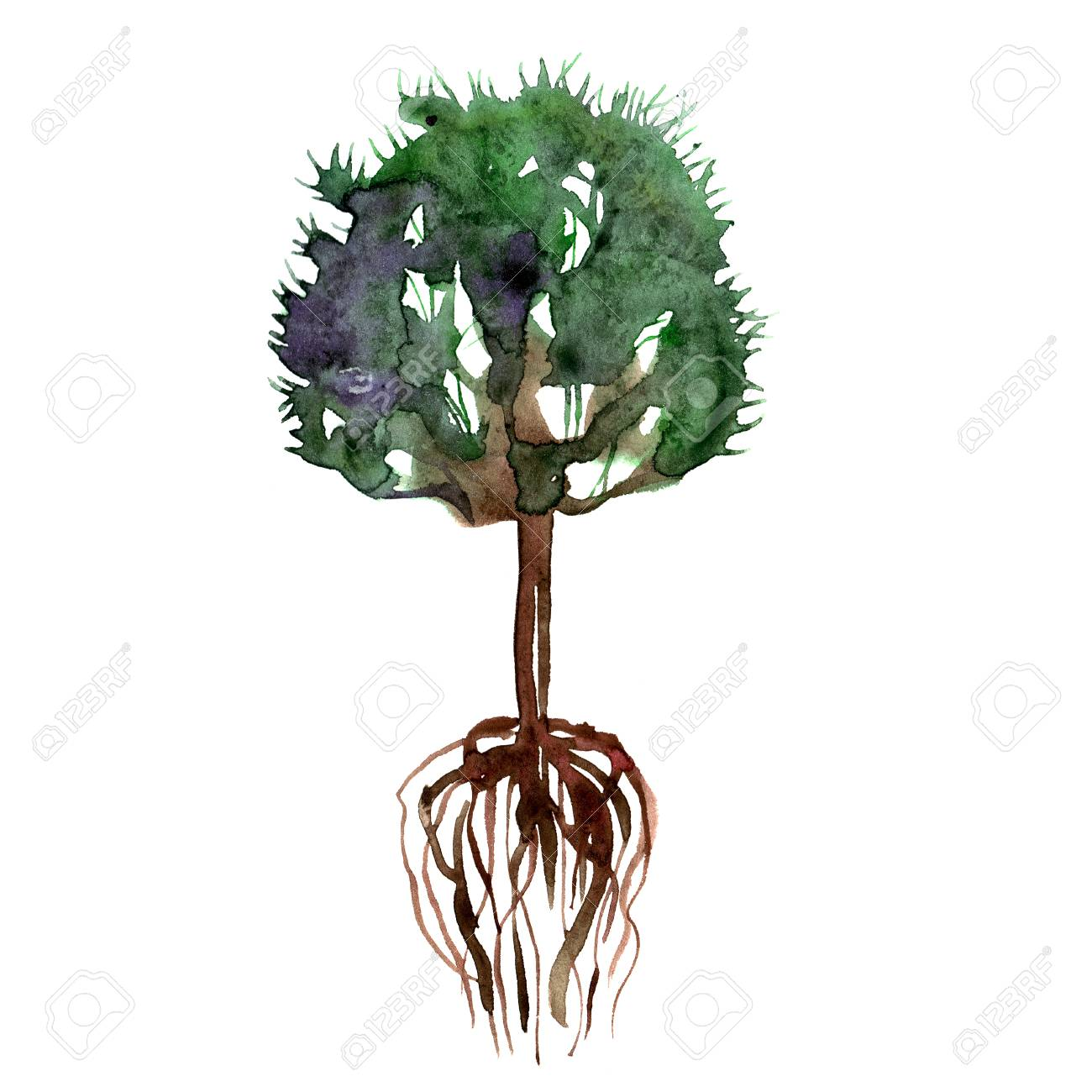Watercolor Hand Painted Green Summer Tree And Roots Stock Photo Picture And Royalty Free Image Image 83689196