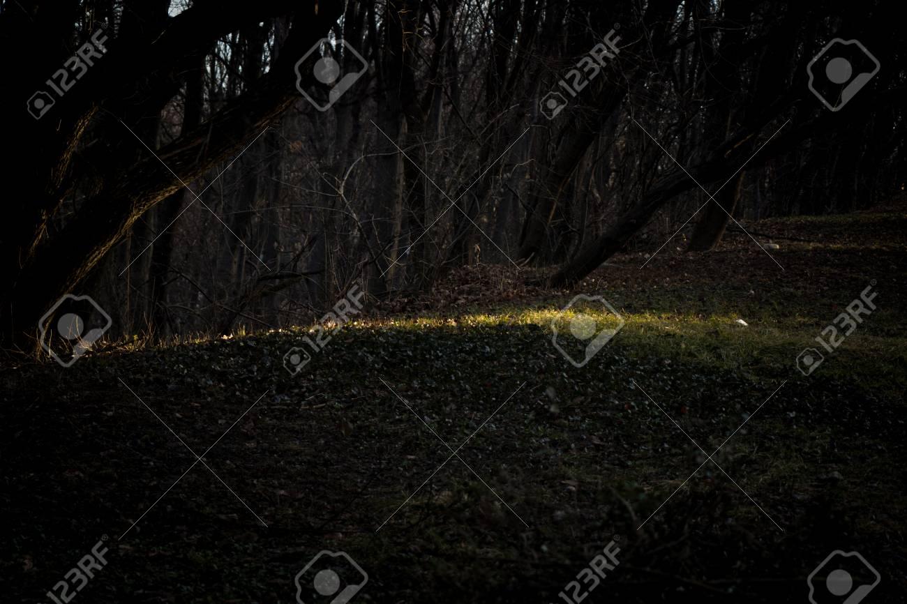 Little light in the forest scene