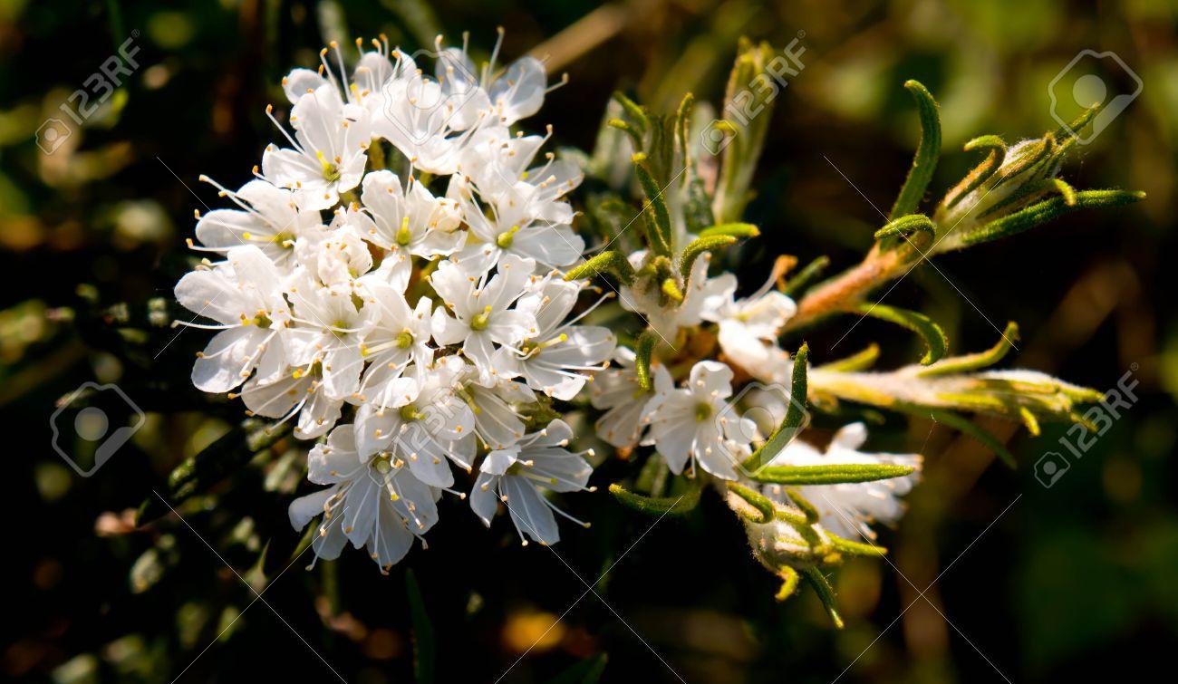 Background green flower cluster flower white yellow stamen background green flower cluster flower white yellow stamen leaves mightylinksfo