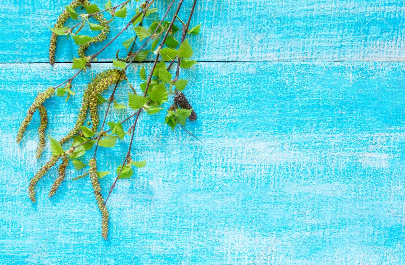 Ramas De árbol De Abedul Florecientes En Un Fondo De Madera Azul ...
