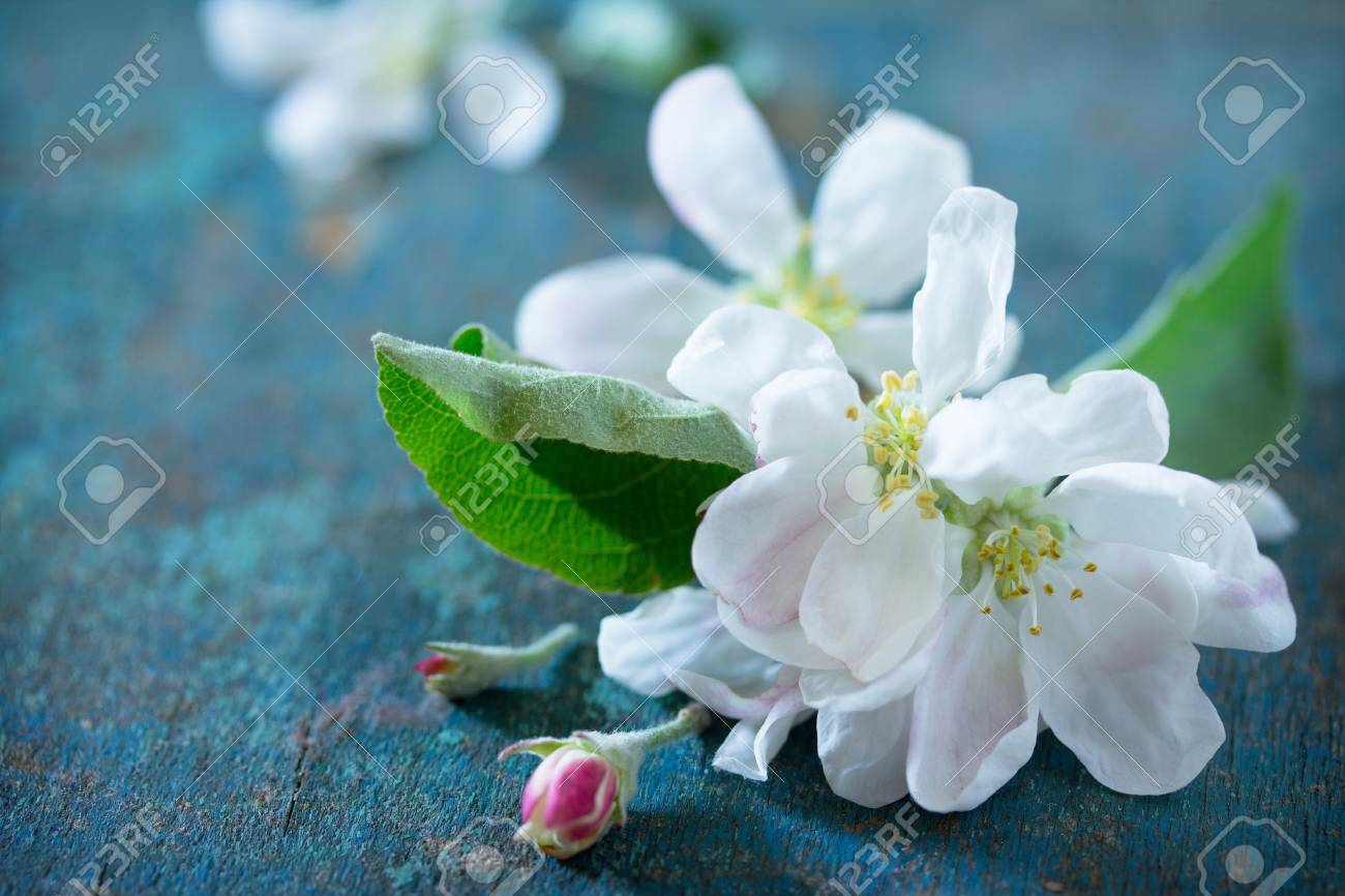 Spring Background Beautiful Fresh White Flowers Of Apple Tree On