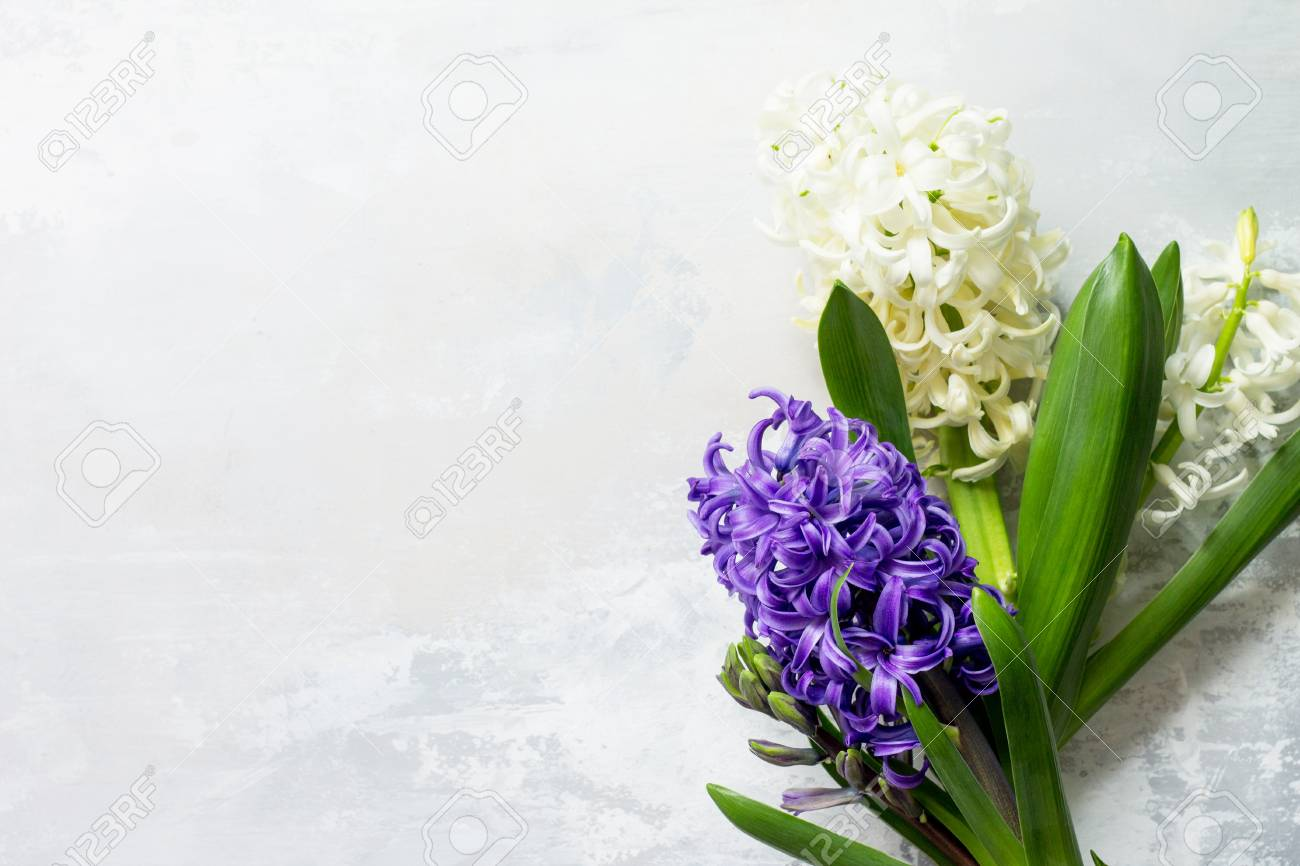 Bouquet Of Hyacinth Flower On Stone Background Or Slate. Spring ...