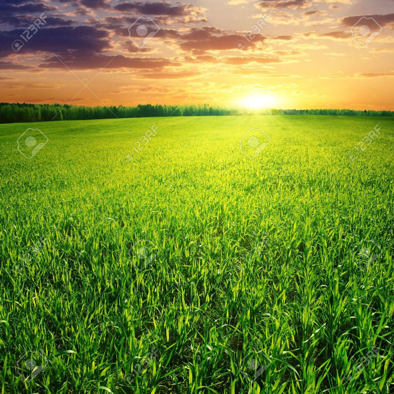 grass field sunset. Field Of Green Grass And Beautiful Sunset. Stock Photo - 11646120 Sunset R