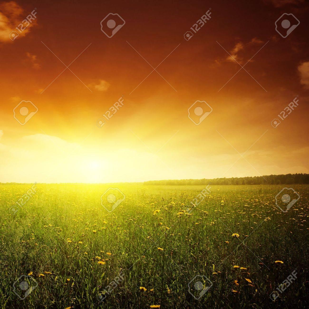 Beautiful sunset and flower field. Stock Photo - 11646095