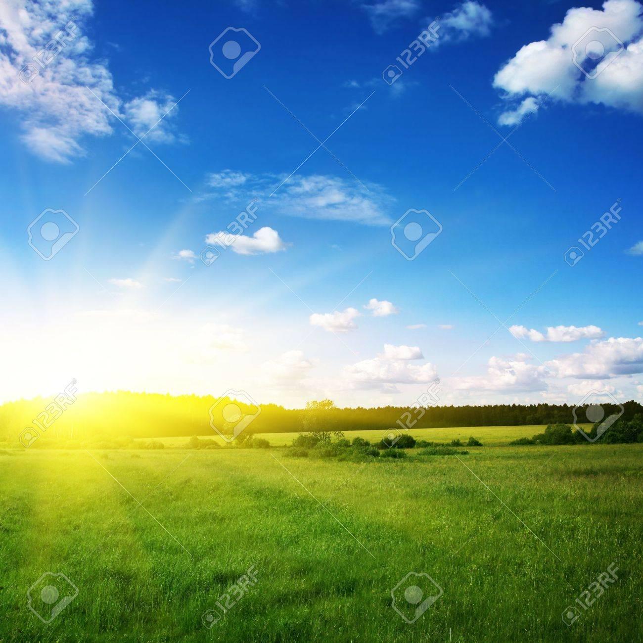 Beautiful sunset and green field Stock Photo - 12466812