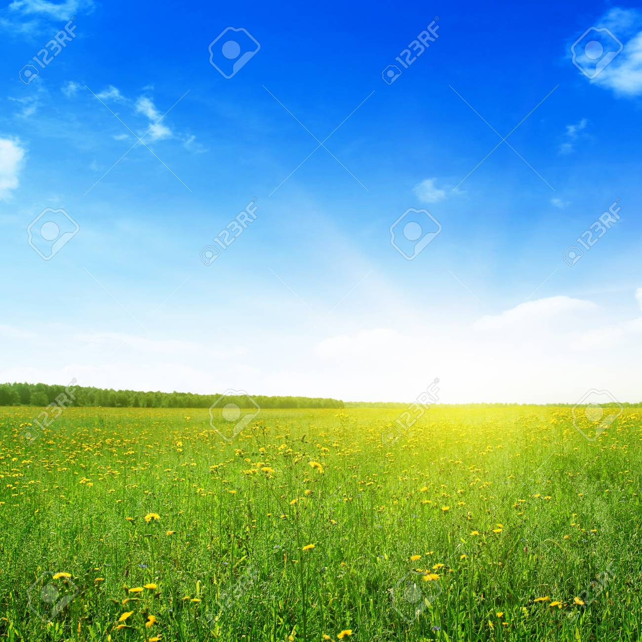Summer landscape Stock Photo - 13013422