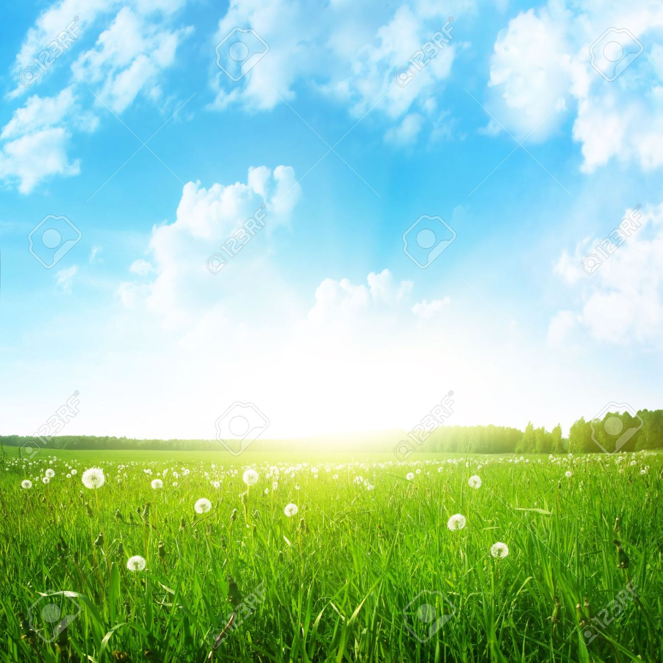 Dandelion field,blue sky and sun Stock Photo - 13075889