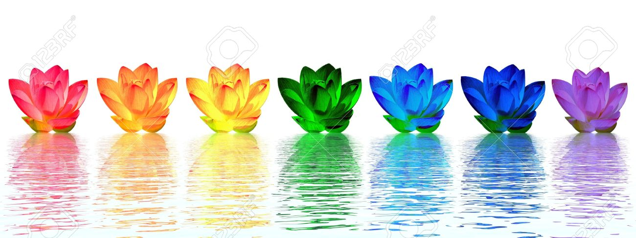 Chakra colors of lily flower upon water in white background Stock Photo - 11266707