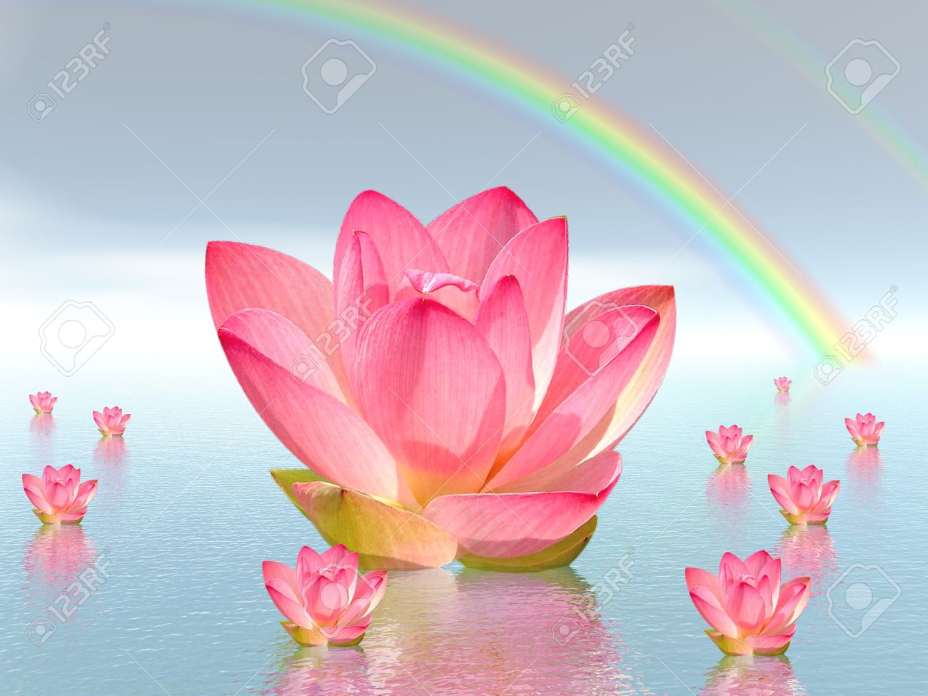 Pink lily flowers on water and under rainbow by beautiful weather Stock Photo - 11266709